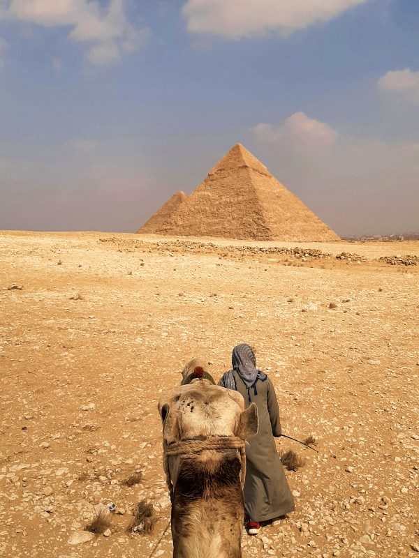 pyramids giza egypt camel