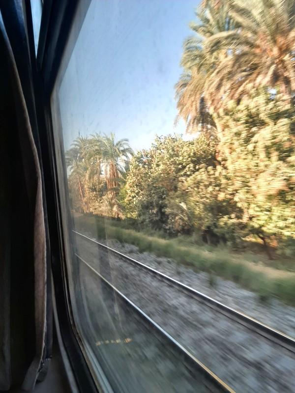 palm grove train ernst watania cairo aswan