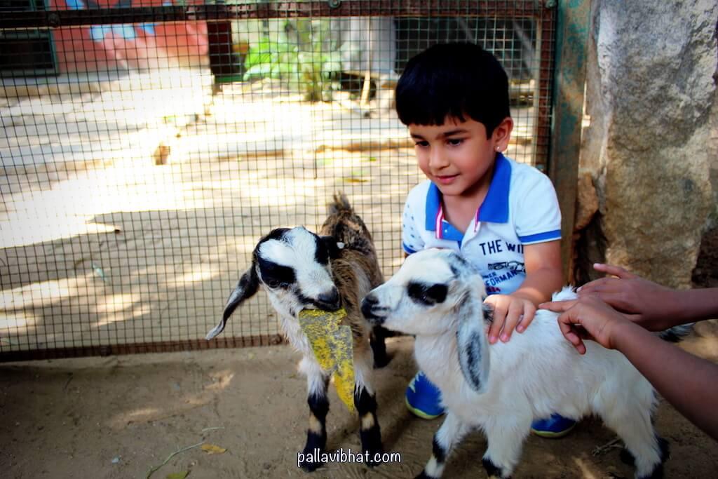 Advit with Goat kid