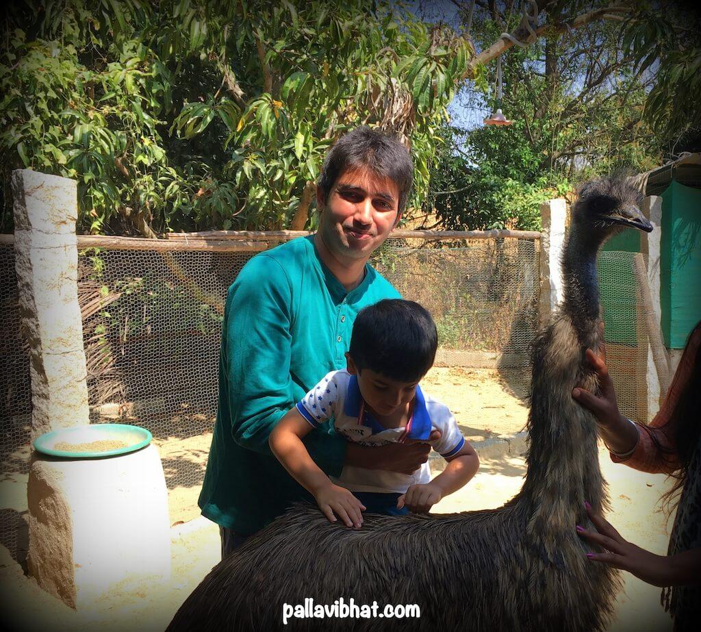 Emu-in-Prani-sanctuary