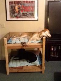 DIY Pet Bunk Bed