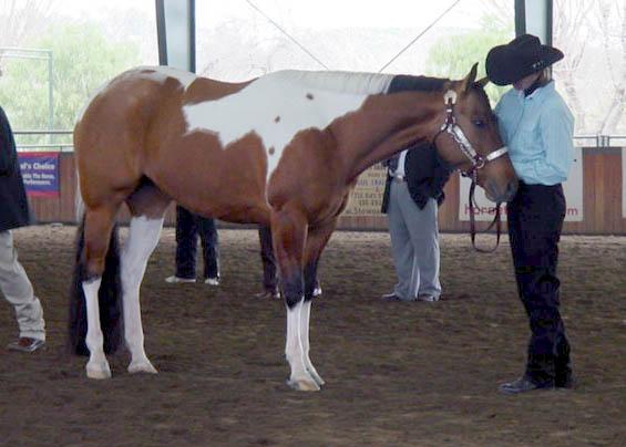 stallion J%20Lo%20tmvphc3-08d