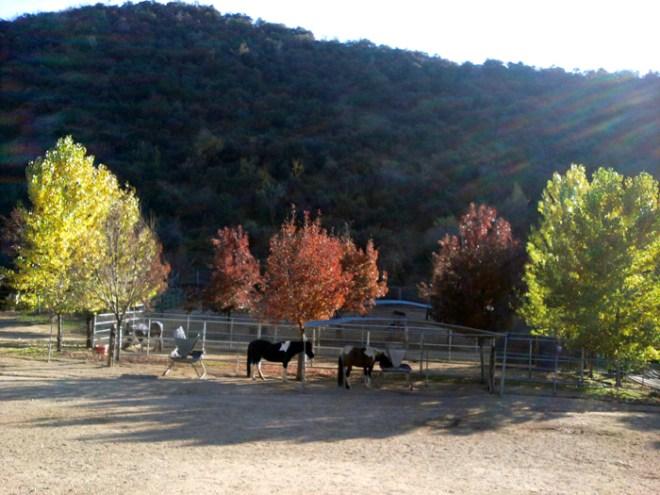 Horsesfall2011