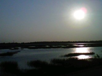 shadowy marsh scene
