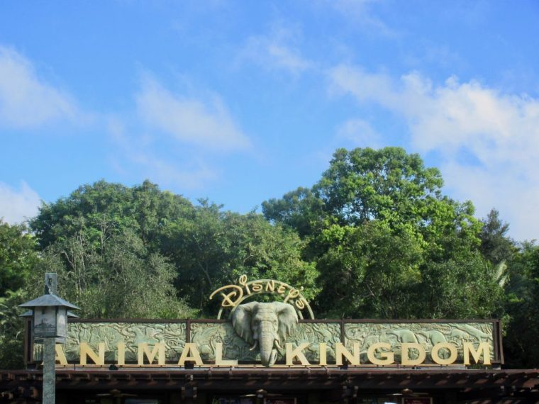 Animal Kingdom 20th Anniversary