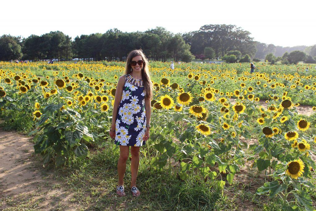 Dorothea Dix Sunflowers
