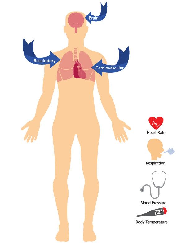 how body is effected by oxycontin graphic