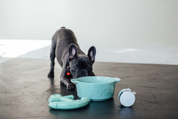 Waggo Ceramic Bowl and Toys | Palms to Pines
