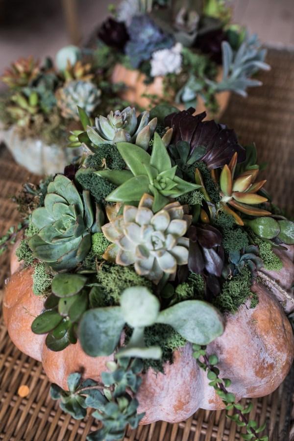 Succulent Pumpkins | Thanksgiving Centerpiece Idea-18