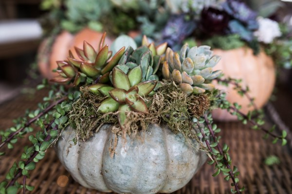 Succulent Pumpkins | Thanksgiving Centerpiece Idea-23