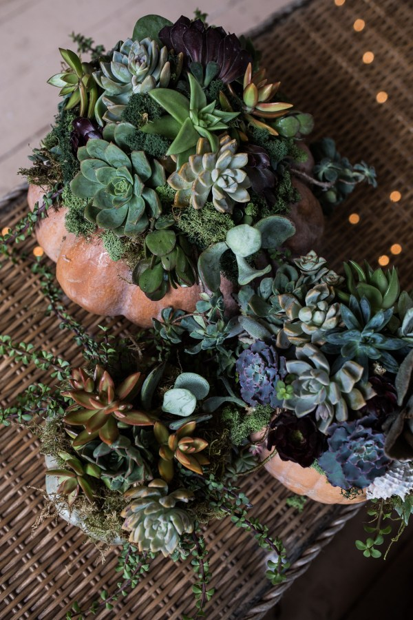Succulent Pumpkins | Thanksgiving Centerpiece Idea-25