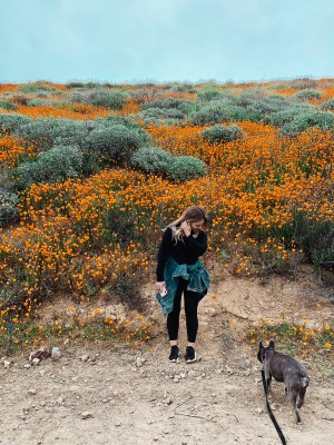 California Super Bloom | Palms to PInes