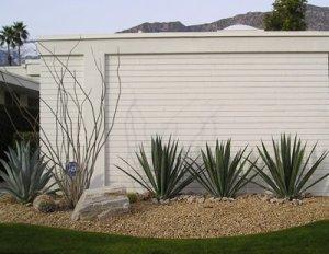 desert modern landscaping palm