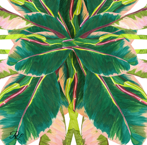 Variegated Tropical Plant