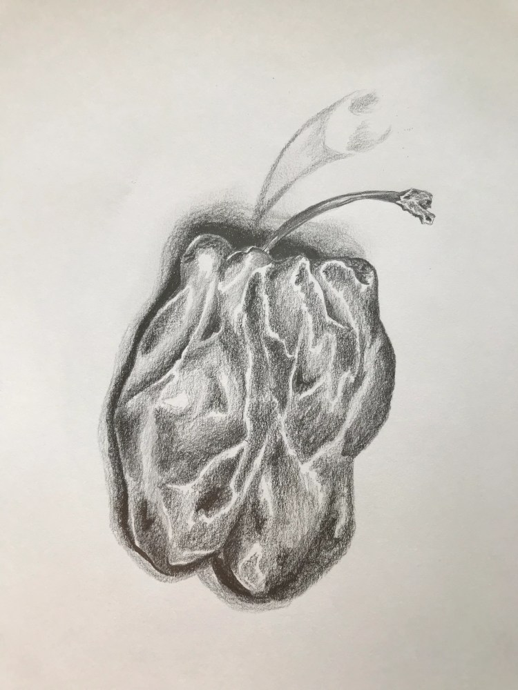 Pepper Sketch, watch me sketch on You Tube