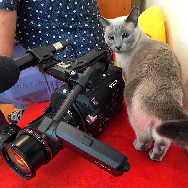 Cameracat