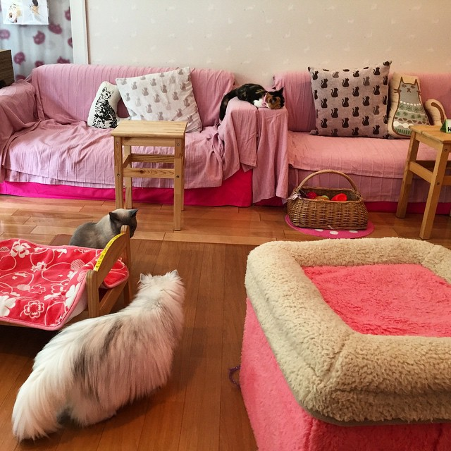 Cat Cafe Hapineko