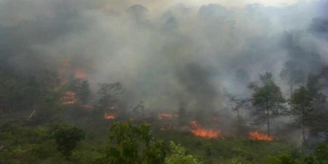 Kebakaran Hutan di Donggala Terus Meluas