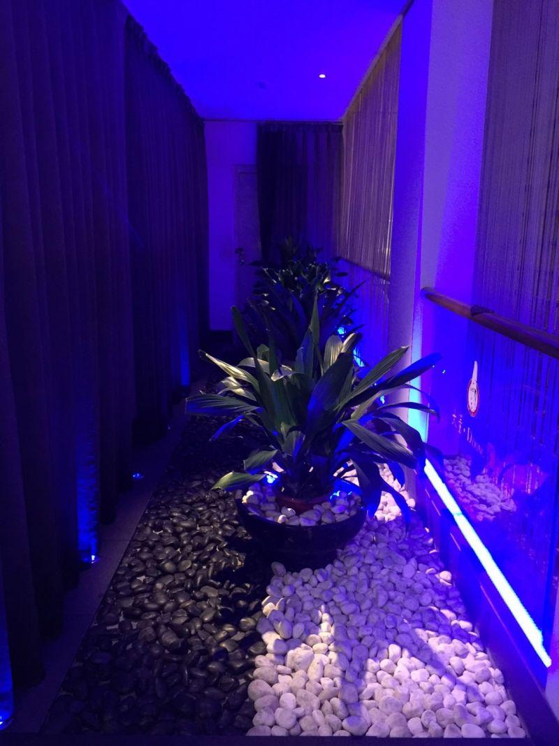 廁所前面的詭異藍色盆栽區,所謂的夜店風?