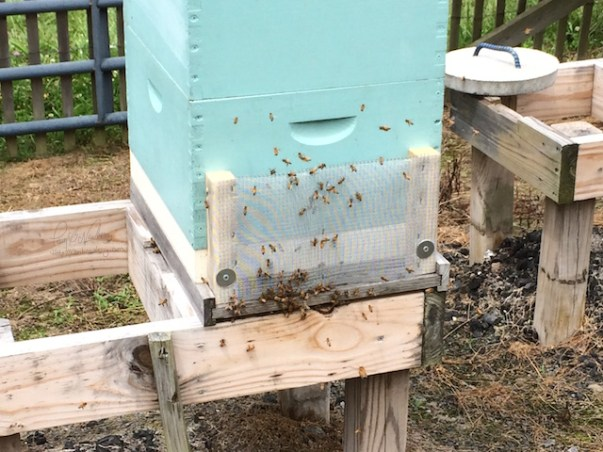 Honeybee Hive Robbing Screen