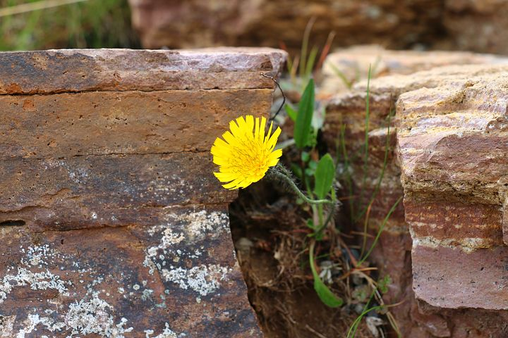 Yellow flower growing out of wall