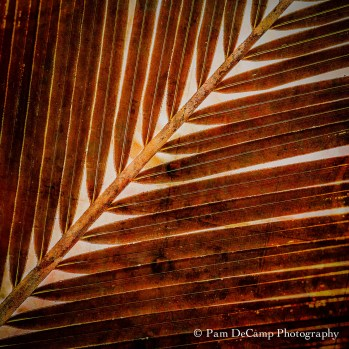 Palm leaf after On1 Effects