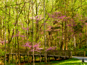 Walking Path at Monticello