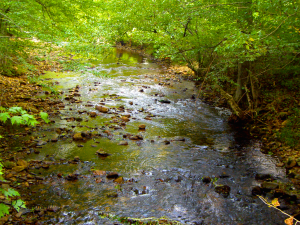 Stream at Blackberry Farm, TN