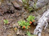 Berries in Canadian Rockies
