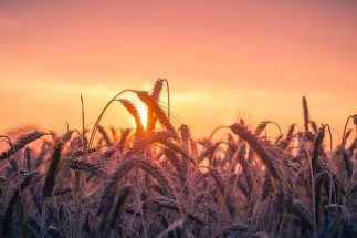 abendstimmung-agriculture-back-light-533982
