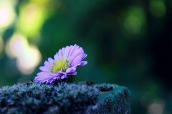 alone-autumn-beautiful-267039