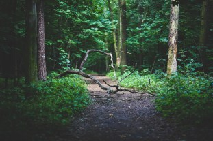 branch-conifer-dawn-6039