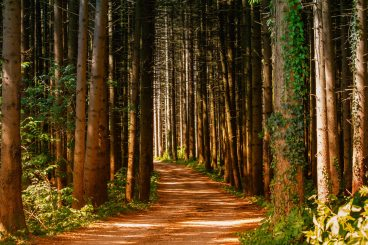 forest-forest-path-leaves-1112186
