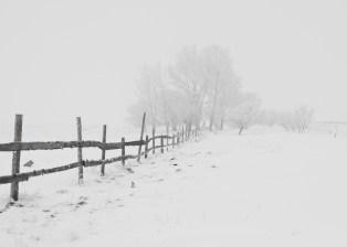 fence-snow-trees-65911