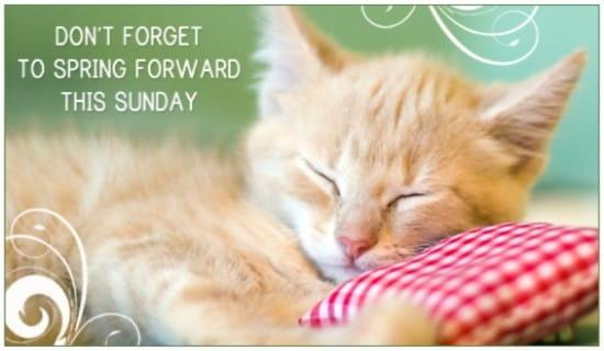 16225-spring-forward-cat-2