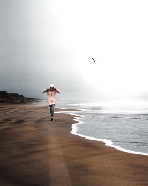 beach-bird-breeze-1903707