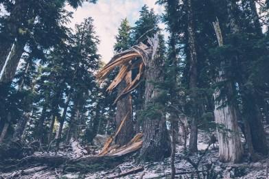 fallen-tree-5224