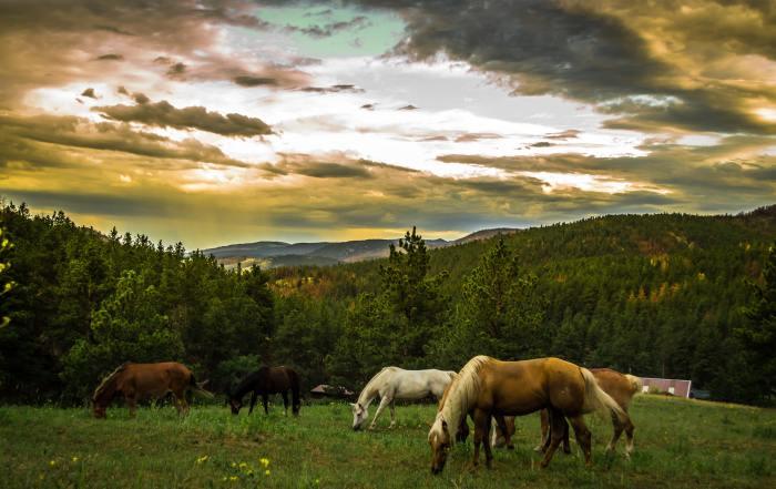 landscape-mountains-nature-horses-60112