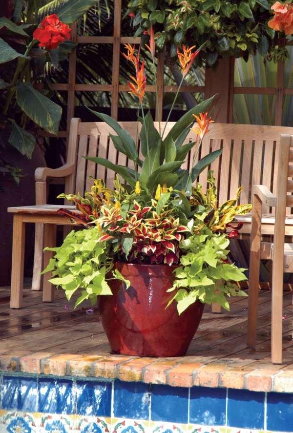 container gardens - palm beach