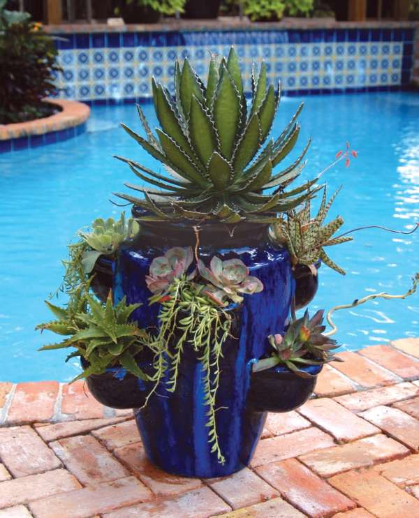 container gardens in palm beach