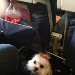"My seat mate returning from Seattle, aptly named ""Precious."""