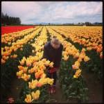 Burlington WA Tulips (& the top of my head)