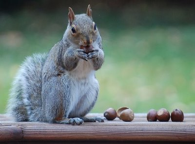 Exploring My Inner Squirrel, or, How I Went Nuts