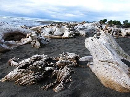 w1-driftwood