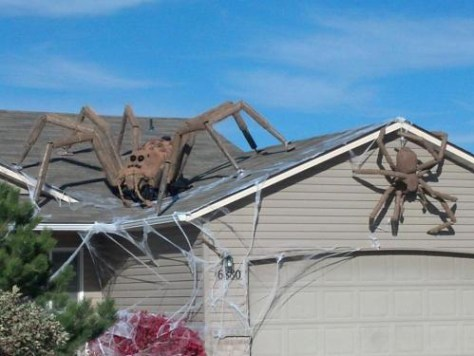 spiders on roof