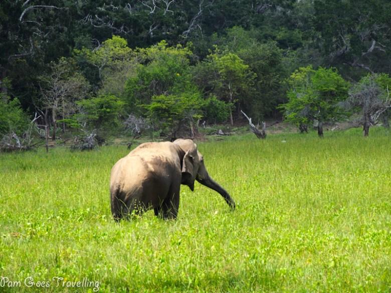 Sri Lanka Safari at Yala National Park