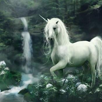 unicorn-httpwww-reddit-comrunicorns