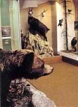 Expozícia príroda Turca