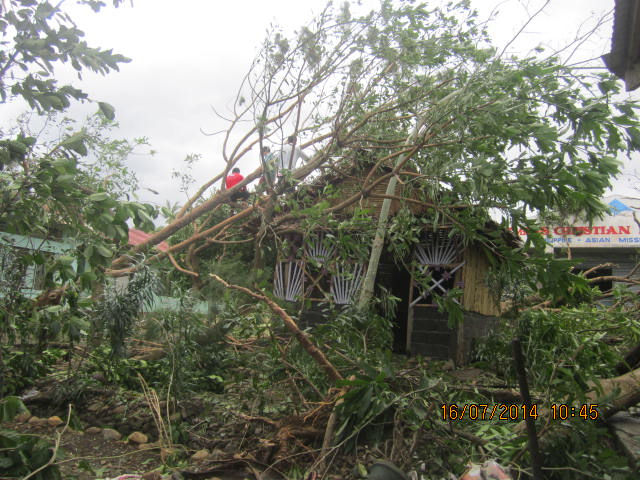 downed trees by second cottage