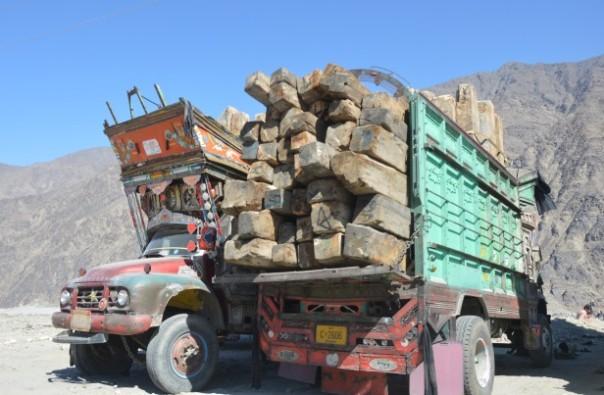 Pakistan's timber mafia threaten forest protection plans – environmentalists